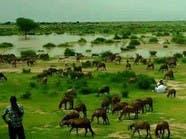 أمطار في السودان تعيد الأمل للحقول وتنشر الذعر بالمدن