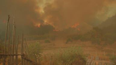 حرائق واسعة في غابات الجزائر