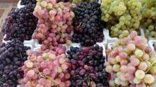 بالصور.. مهرجان للعنب في بلقرن السعودية