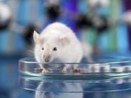 دراسة: شكوك حول نتائج الأبحاث الطبية على الحيوانات
