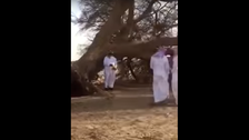 WATCH: Massive uprooted tree sparks controversy in Saudi Arabia