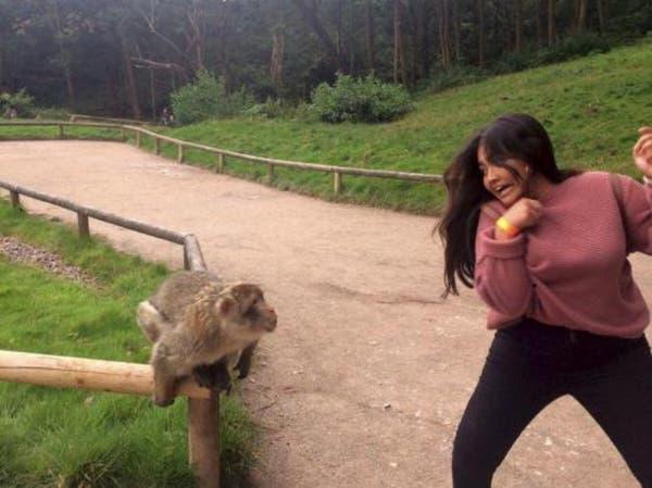 """بالصور.. حين يمل """"القرد"""" من السيلفي!"""