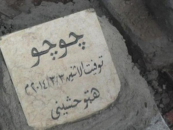 صور غريبة.. مقابر للقطط والكلاب بأرقى نادٍ مصري