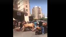 بالفيديو.. طعن بالسكاكين والدم يلون الطرقات شمال لبنان