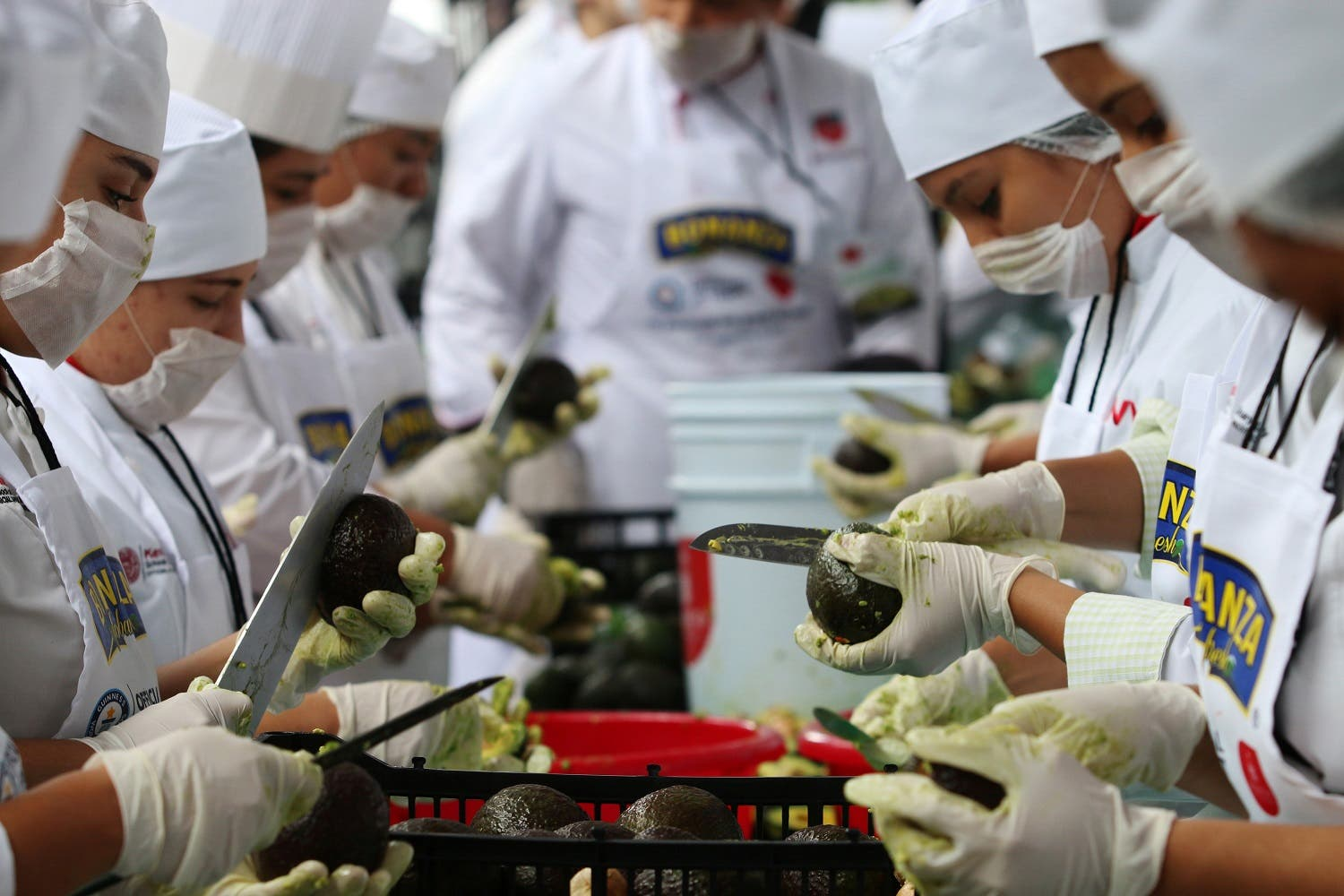 Volunteers from a culinary school cut avocados as they attempt to set a new Guinness World Record for the largest serving of guacamole in Concepcion de Buenos Aires, Jalisco, Mexico September 3, 2017. REUTERS