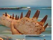 المغرب يفتح تحقيقا بسبب إعلان بيع ديناصور على الإنترنت