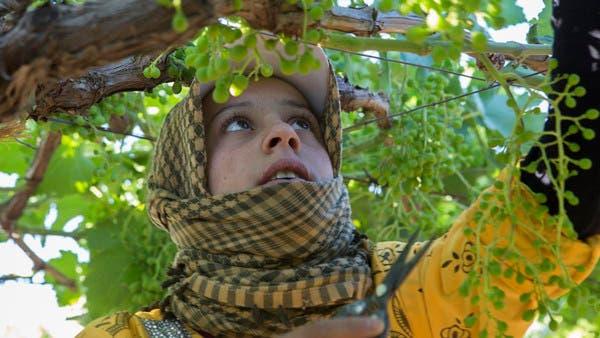 60%  من عمل الأطفال موجود في قطاع الزراعة