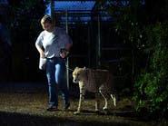 بالصور.. حديقة الحيوان في ميامي تتأهب للإعصار إيرما