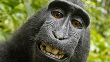 No more monkeying around: 'Monkey selfie' case settled