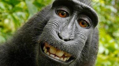 """أخيرا.. حسم معركة حول """"سيلفي"""" بين مصور وقرد"""