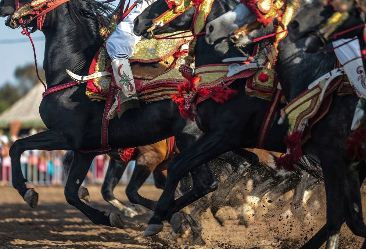 Ancient tradition of horsemanship in Morocco