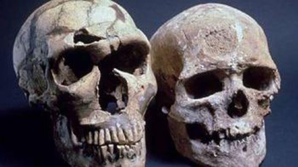جمجمة الإنسان المعاصر على اليمين، وعلى اليسار جمجمة النياندرتال