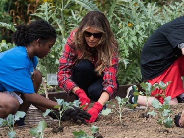 شاهد ميلانيا ترمب تزرع وتجني الخضار ببستان ميشال أوباما