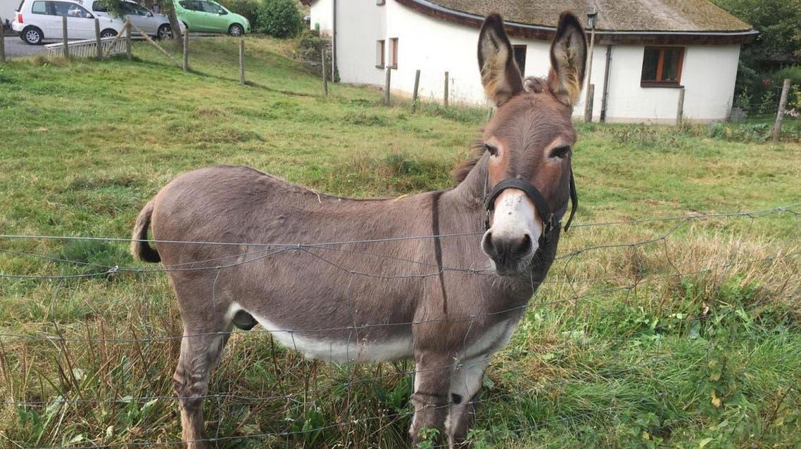 Donkey 'Vitus' on his meadow in Schlitz, central Germany. (Hit Radio FFH/dpa via AP)
