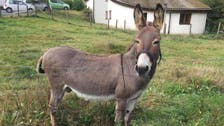Court tells donkey's owners to pony up for damaged McLaren car
