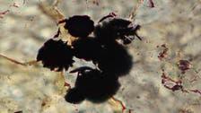 صخور تثبت أن الحياة على الأرض وجدت منذ 4 مليارات عام
