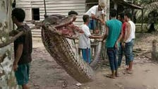 Snake on a plate: Indonesian villagers feast on python after it bit man's arm