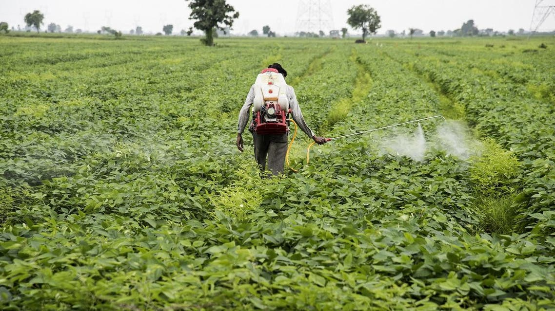 The use of spurious pesticides, made secretly and sometimes given names that resemble the originals, has been rising in India. (Shutterstock)