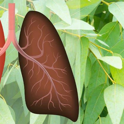 أفضل 10 أغذية لتحسين صحة الرئتين