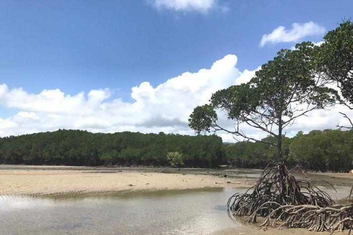 النهر حيث عُثر على التمساح
