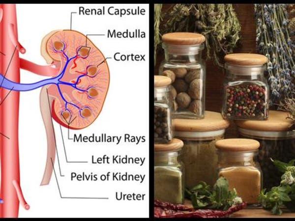 6  أعشاب طبيعية للحفاظ على صحة الكلى