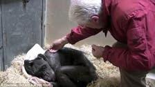 فيديو.. شمبانزي في سكرات الموت تودع صديقها البروفيسور