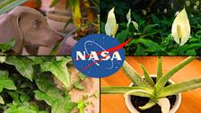 """""""ناسا"""" کے مطابق سونے کے کمرے میں یہ پودے ضرور رکھیے"""
