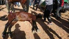 شاهد.. حادث مروّع بين سيارة أمنية وخيول في الجزائر