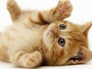 علمياً.. القطط تحميك من الأزمات القلبية!