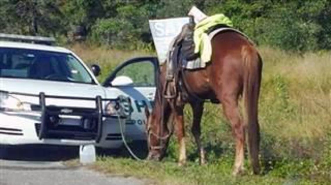 """توقيف امرأة بتهمة """"امتطاء حصان"""" في حالة سكر"""