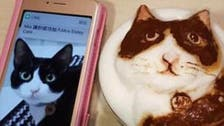 حيوانك الأليف يتحول لرسمة بالقهوة والحليب في تايوان