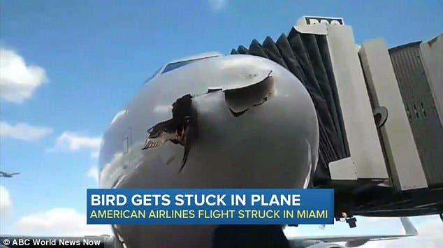 الطائر ظل عالقاً بالطائرة