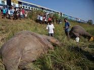 بالصور.. قطار هندي يصدم فيلين نادرين ويقتلهما