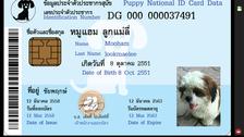 جی ہاں! پاکستان میں اب جانوروں کو بھی شناختی کارڈ اور پاسپورٹ ملا کرے گا
