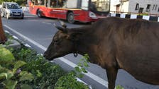 Muslim beaten to death in India for allegedly killing a cow