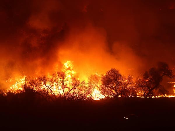 بالصور.. حتى اسطبلات الخيول لم تسلم من حرائق كاليفورنيا