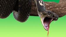 8 حقائق شيقة عن الثعابين.. منها أنها تجلب الحظ!