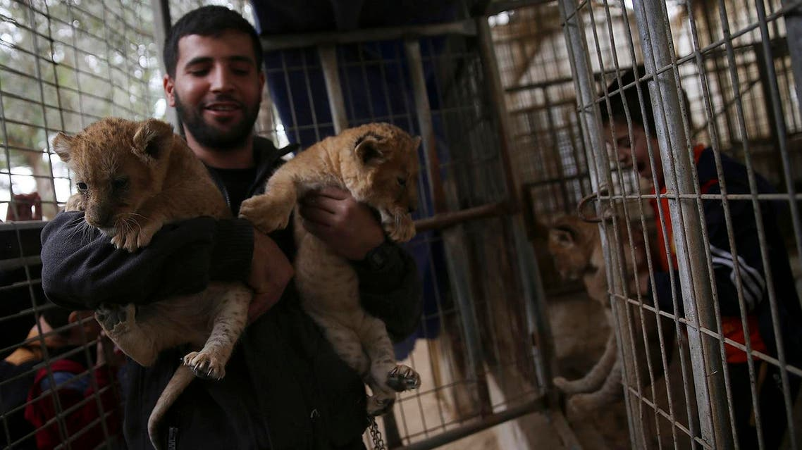 Ahmad Joma'a, a zoo worker holds two-month-old lion cubs at the zoo in Rafah, Gaza Strip, on Friday, Dec. 22, 2017.  (AP)