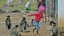 IN PICTURES: Indian toddler forges cute friendship with gang of monkeys