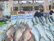 الخليجيون يتمتعون بالأسماك..والقطريون يبحثون عن الألبان