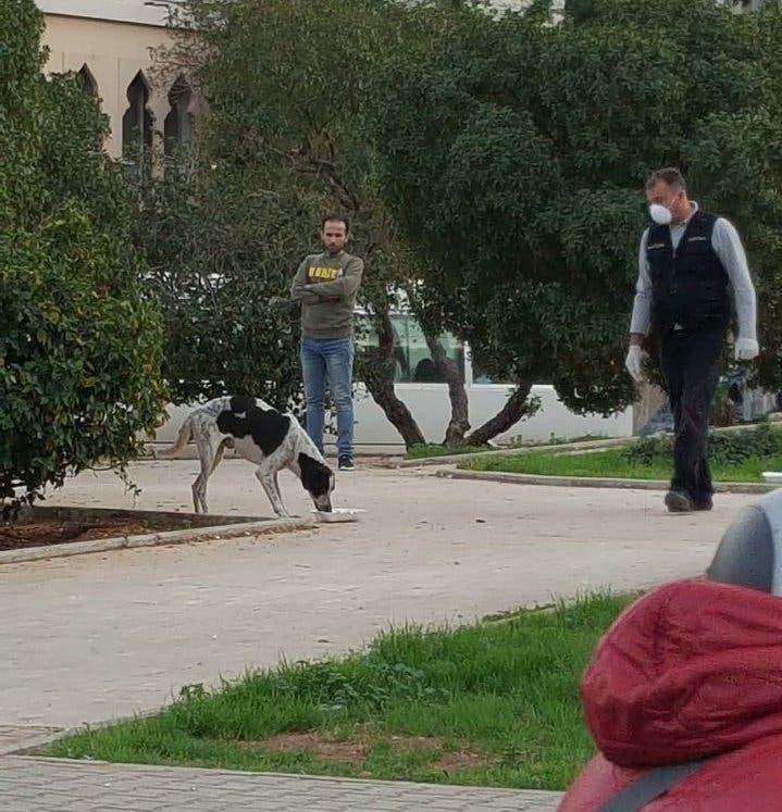 دس السم للكلاب في لبنان