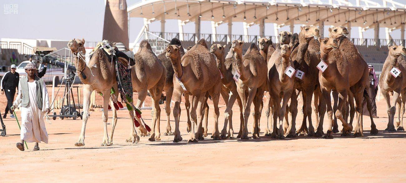 مهرجان الملك عبد العزيز للإبل