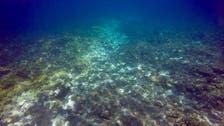 """الحاجز المرجاني العظيم يواجه خطراً جديداً.. """"الالتهام"""""""