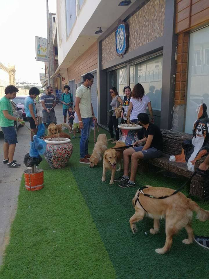 animal cafe alexandria. (Social media)