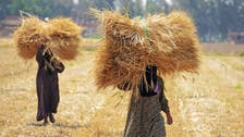 Egypt supply minister expects wheat prices to stabilize