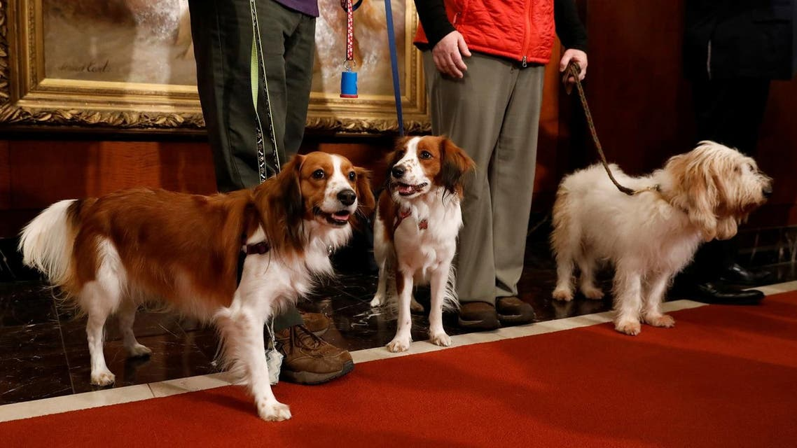 dogs. Reuters