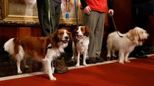 American Kennel Club recognizes two new dog breeds