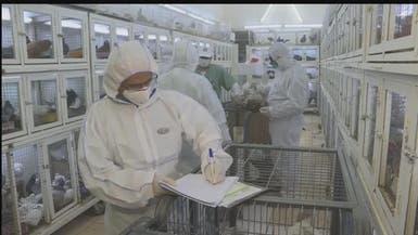 الصحة السعودية تنفي إمكانية انتقال فيروس أنفلونزا الطيور للبشر