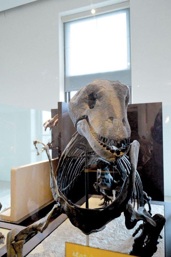 الباروصور( السحلية الضخمة) هو ديناصور آكل للنباتات، عاش في أواخر العصر الجوراسي - منذ حوالي 150 مليون سنة