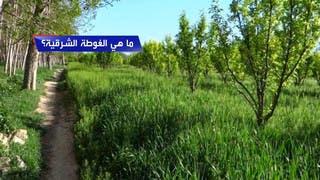 ما هي الغوطة الشرقية؟